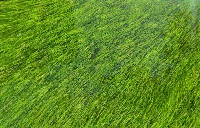 Césped artificial: la clave para un jardín verde en otoño