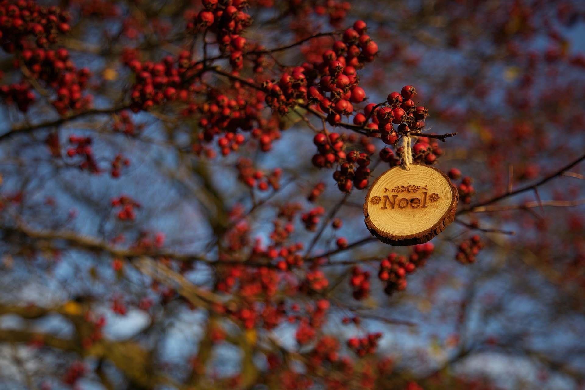 Ni árbol ni espumillón: esta Navidad decora con flores